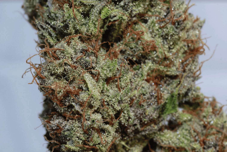 Quality Maine Marijuana