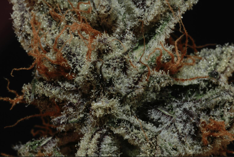 Premium Cannabis Strains